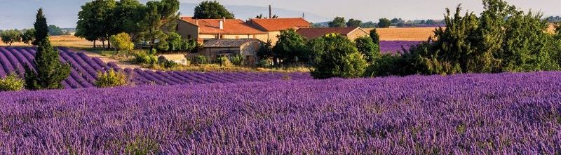 Flavours of Burgundy & Provence